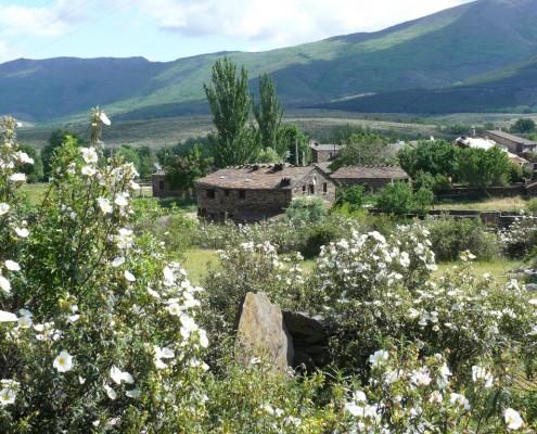 casa rural y jaras