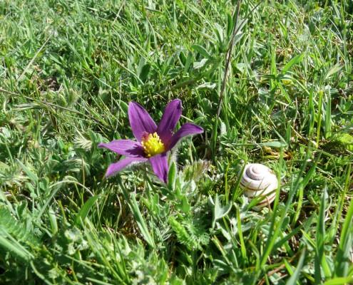 flor del viento abierta