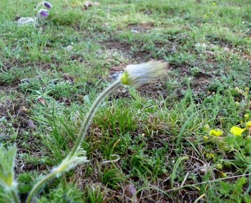 Una vez perdida la flor