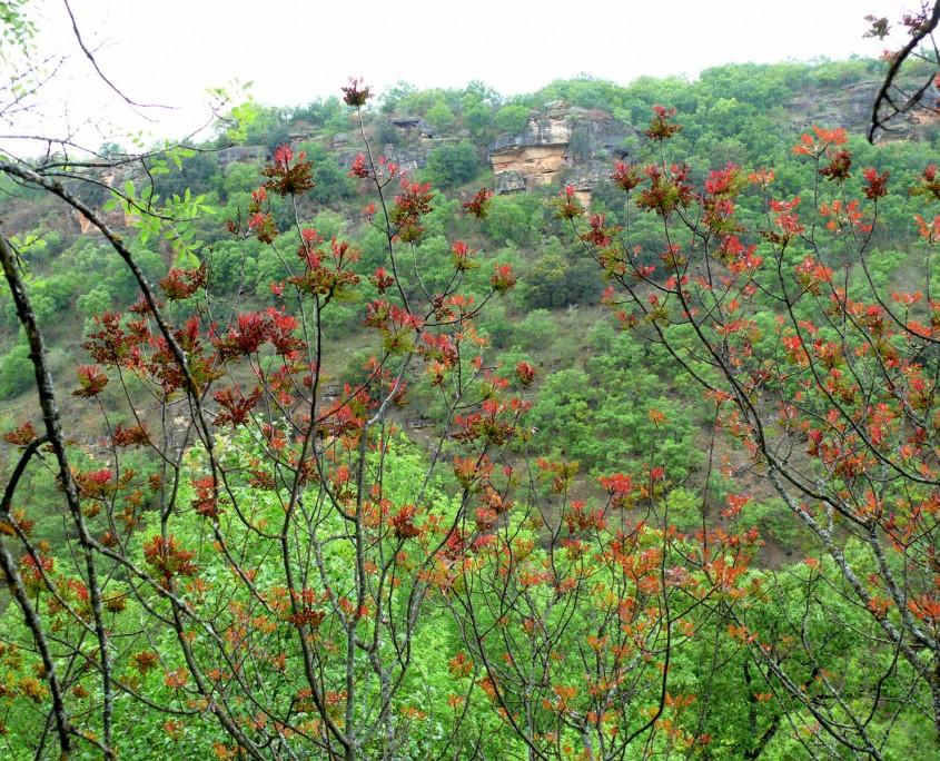 Vegetación y rocas