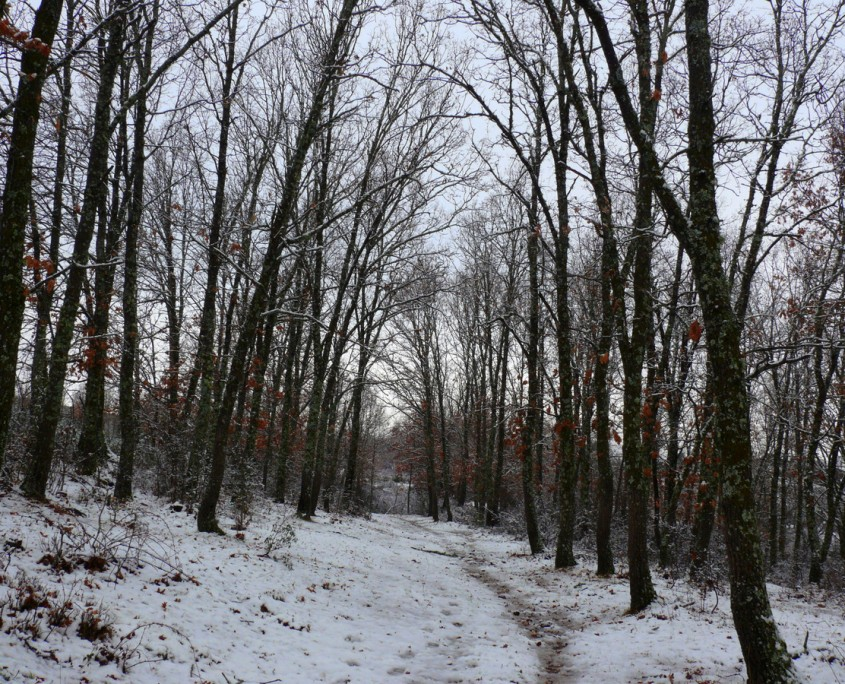 bosque en invierno