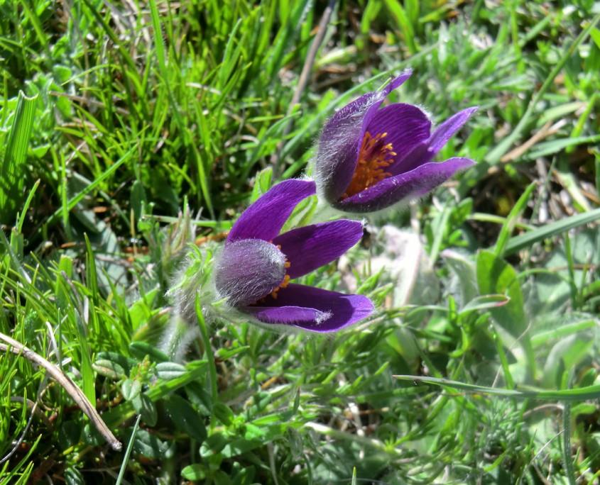 Flores del viento